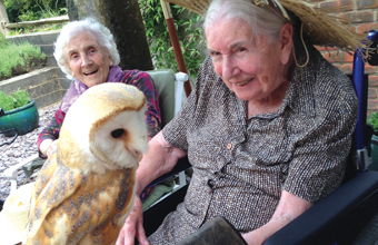 Aerial display delights Winchester care home residents